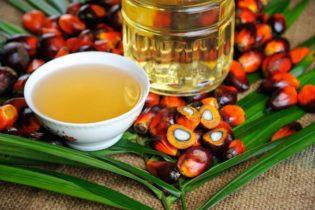L'Italia promuove la produzione di olio di palma 'certificato' sostenibile