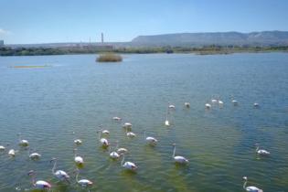 Economia ed ecologia possono coesistere. Lo dimostra la Riserva Naturale Marina di Priolo.