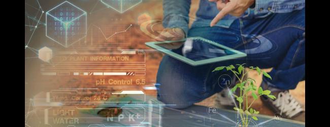 Le imprese della trasformazione alimentare sono sempre più digitali: i dati